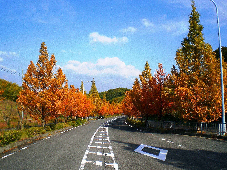岸和田丘陵地区の風景